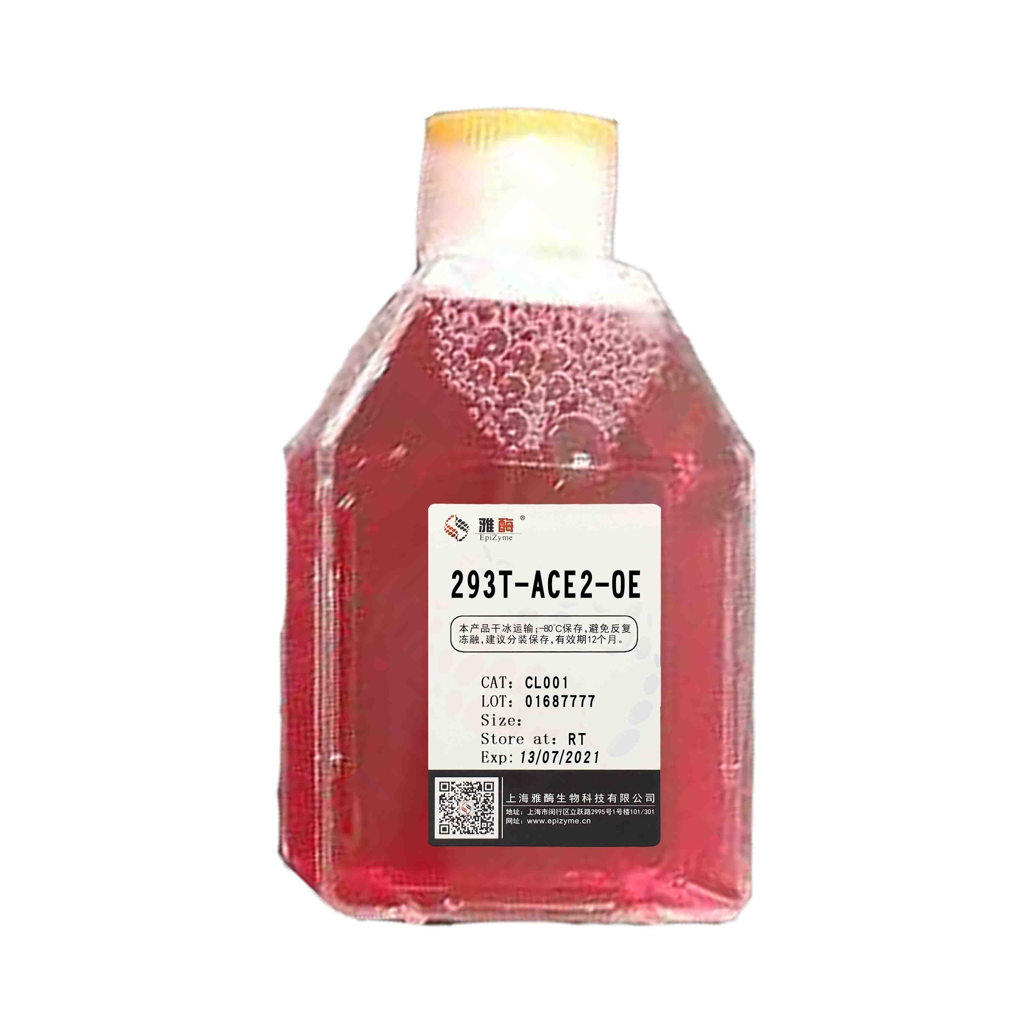 CL001  293T-ACE2-OE 细胞株