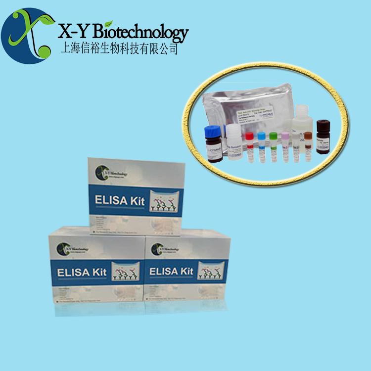 VEGFR3试剂盒