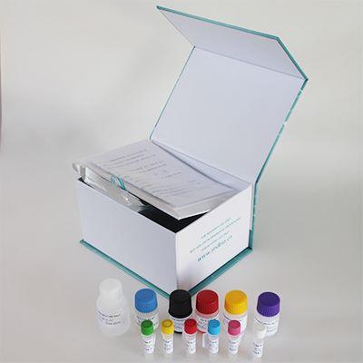 兔免疫球蛋白G(IgG)ELISA试剂盒