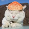 橘子glykl