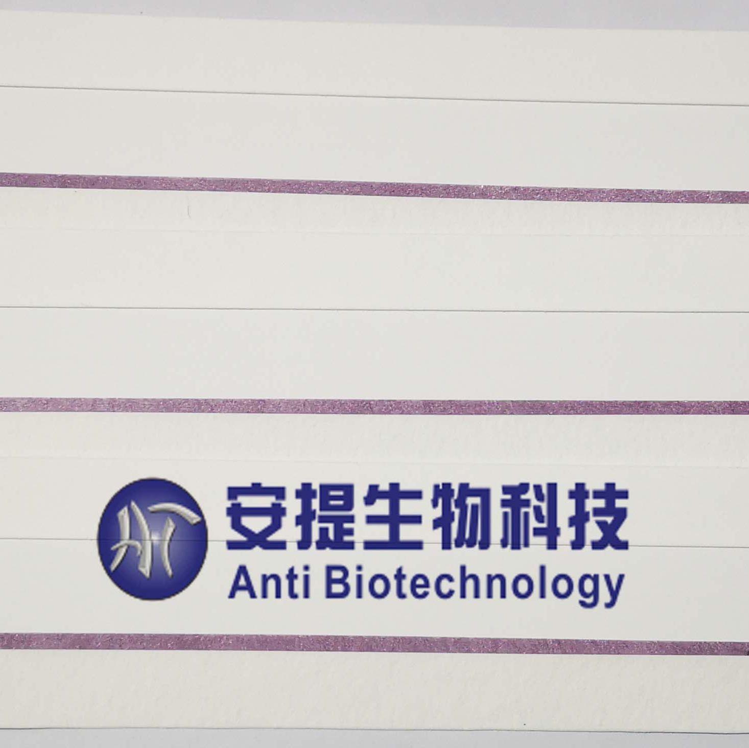 新型冠状病毒抗原检测大板  新型冠状病毒抗原检测半成品 胶体金法