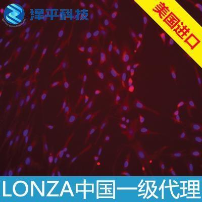 牙髓干细胞