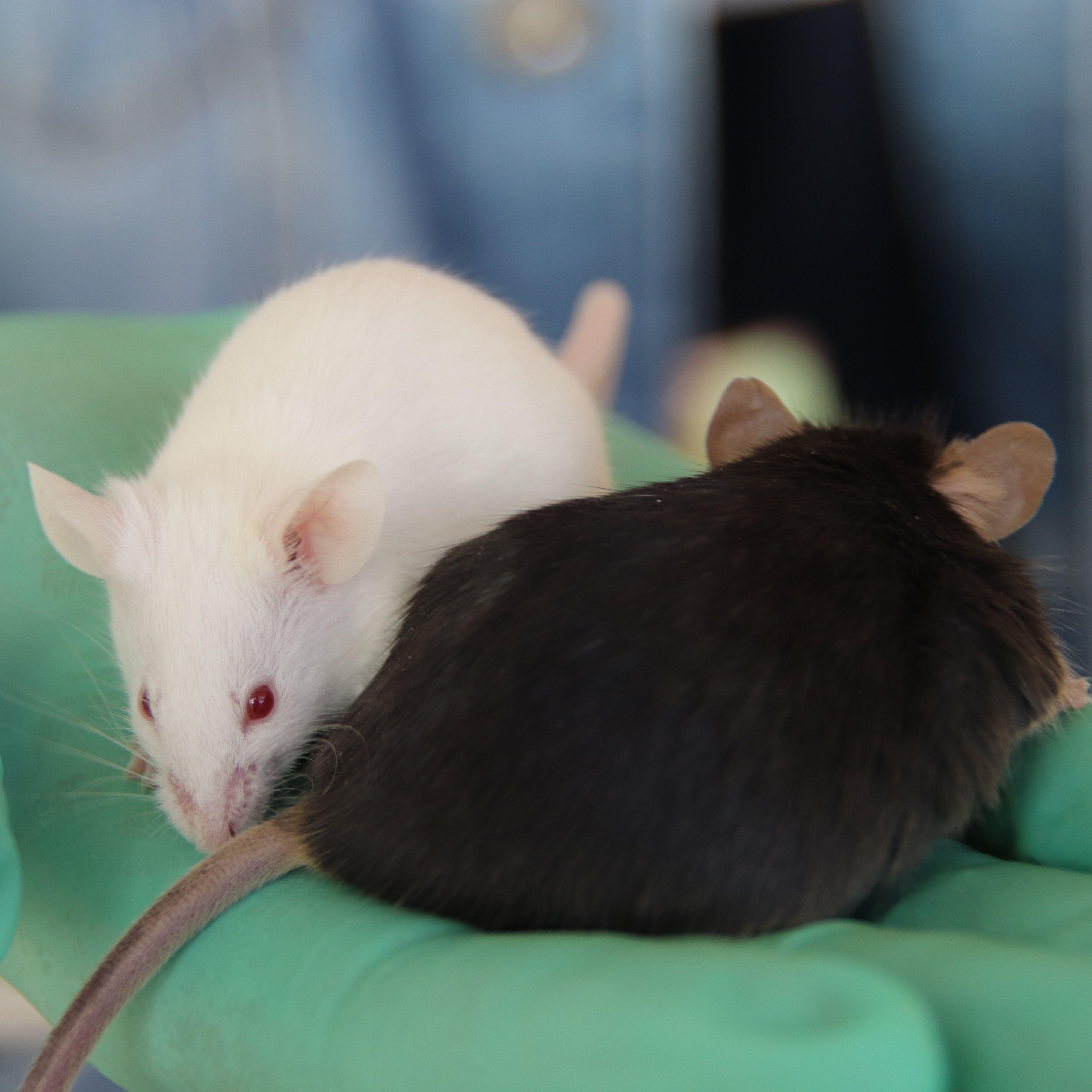 细胞生物学研究相关小鼠模型
