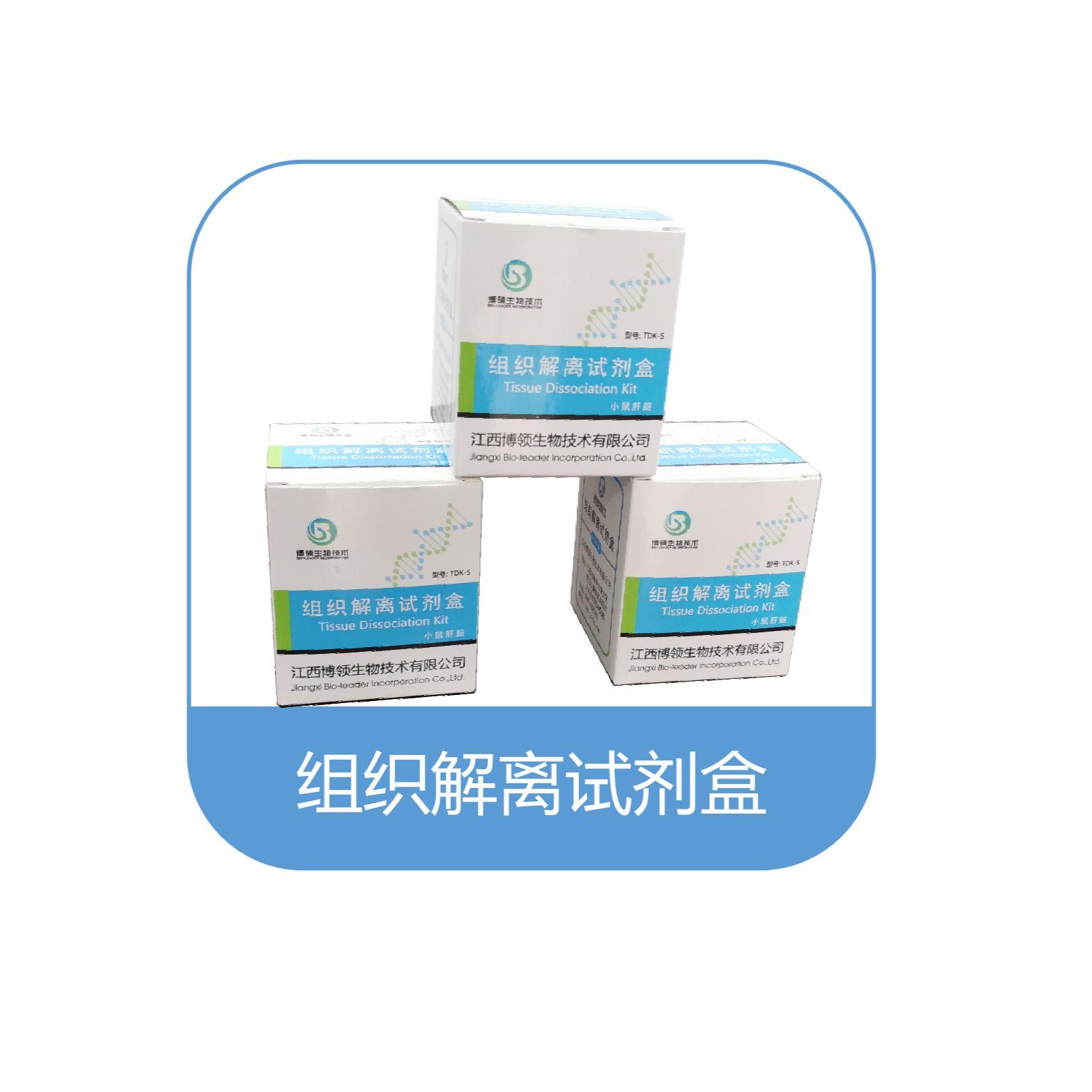 肾脏解离试剂盒