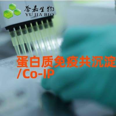 蛋白质免疫共沉淀/Co-IP