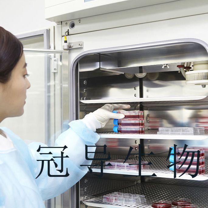 KYSE 270:人食道鳞状细胞癌复苏细胞|完全培养基