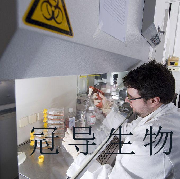 MDCK II:犬肾复苏细胞|完全培养基