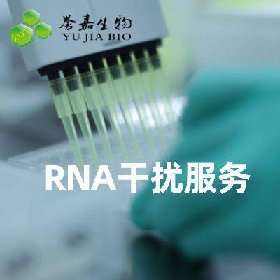 RNA干扰服务