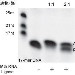 5'DNA 腺苷化试剂盒