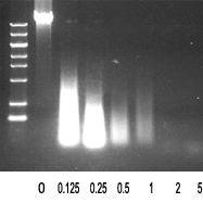 Benzonase 核酸酶(科研级)