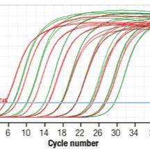 实时定量PCR服务