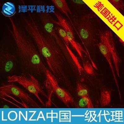 Human Bone Marrow Derived Mesenchymal Stem Cells