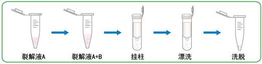 5min极速病毒RNA提取试剂盒
