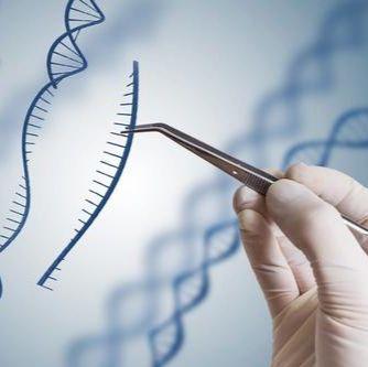 AAV-CRISPR基因编辑