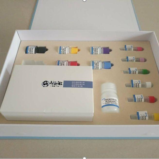 人T细胞急性淋巴母细胞白血病相关抗原(TALLA-1/CD231)ELISA试剂盒96T