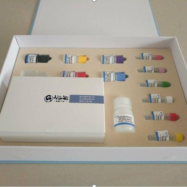 大鼠αL岩藻糖苷酶(AFU)ELISA试剂盒96T