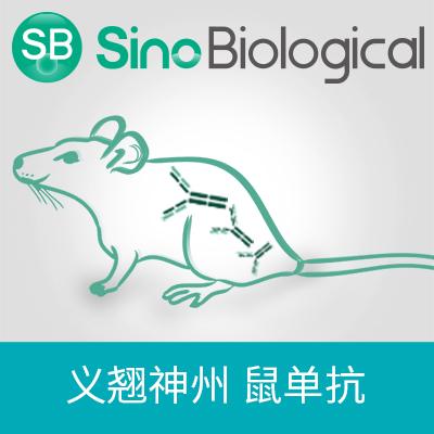 SARS-CoV/SARS-CoV-2 Nucleoprotein / NP Antibody,鼠单克隆抗体