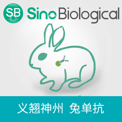 VISTA VISTA antibody VISTA抗体(anti-Rhesus兔多抗)