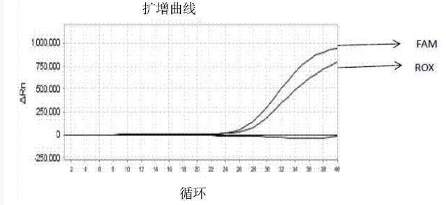 PCR级甜菜碱溶液,5M
