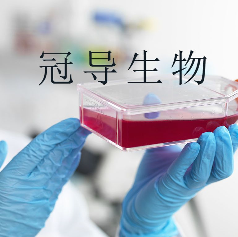 YAC-1:小鼠淋巴瘤低代次细胞 完全培养基