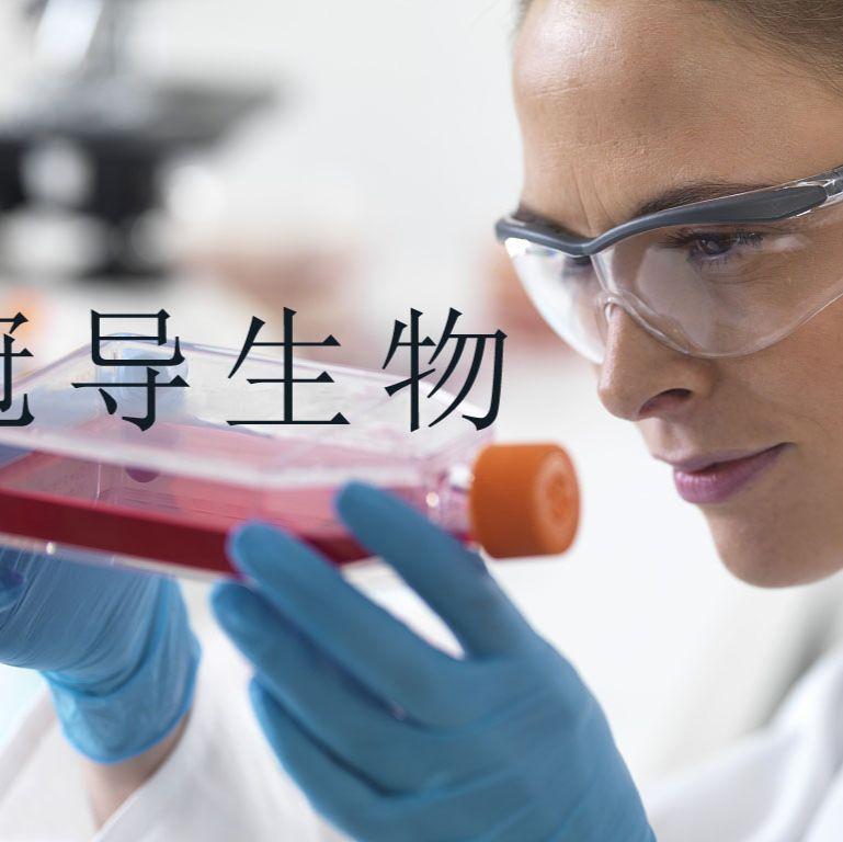 L1210:小鼠淋巴细胞白血病低代次细胞 完全培养基