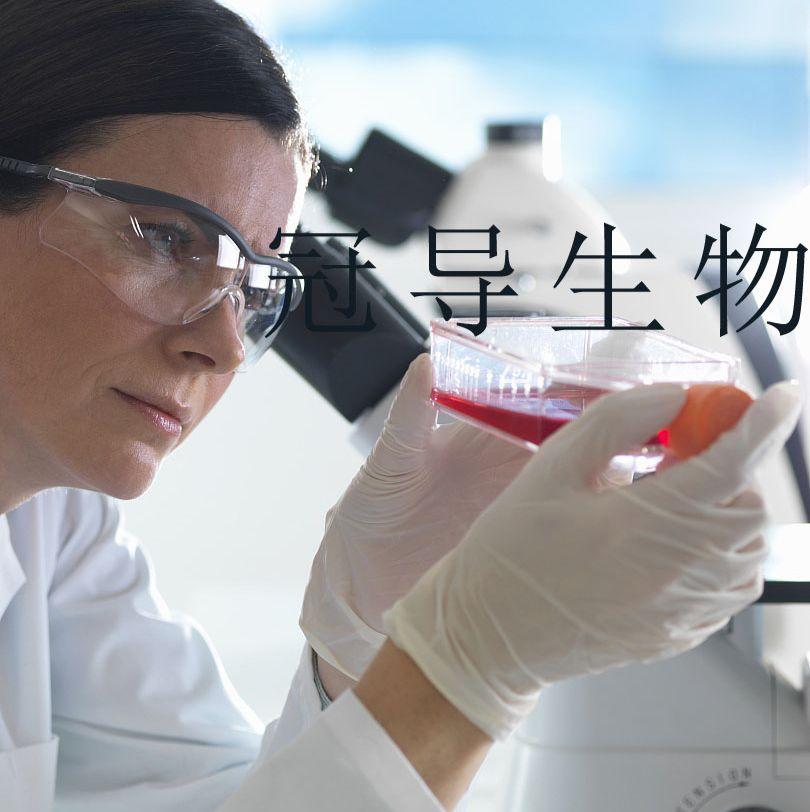 CTLL-2:小鼠T淋巴低代次细胞 完全培养基
