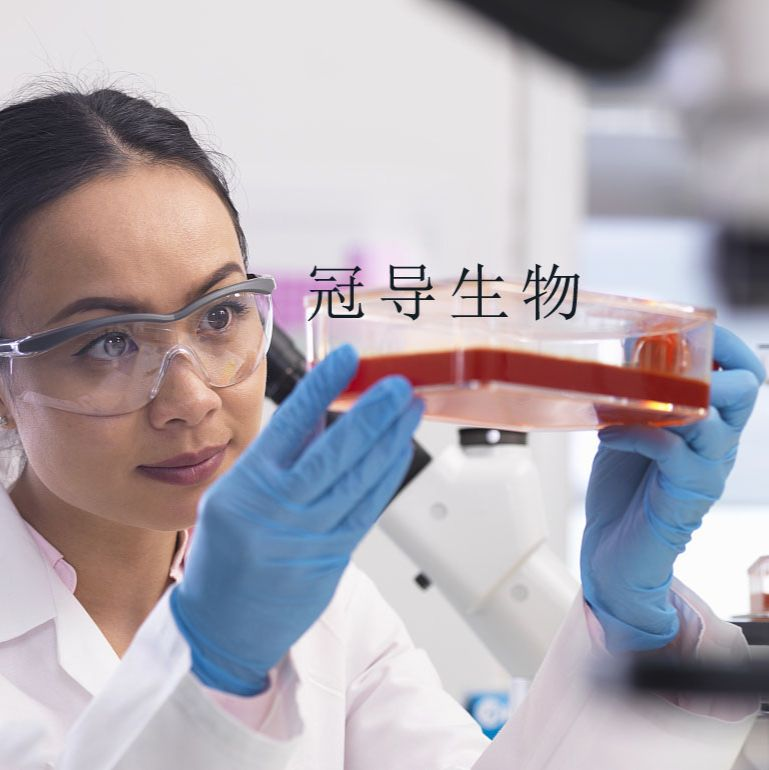 JB6 Cl 30-7b:小鼠表皮低代次细胞 完全培养基
