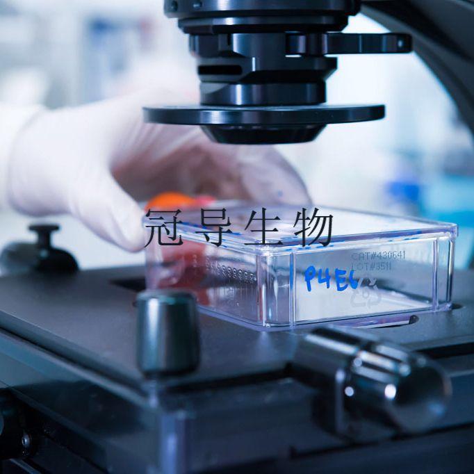 B16:小鼠黑色素瘤低代次细胞 完全培养基