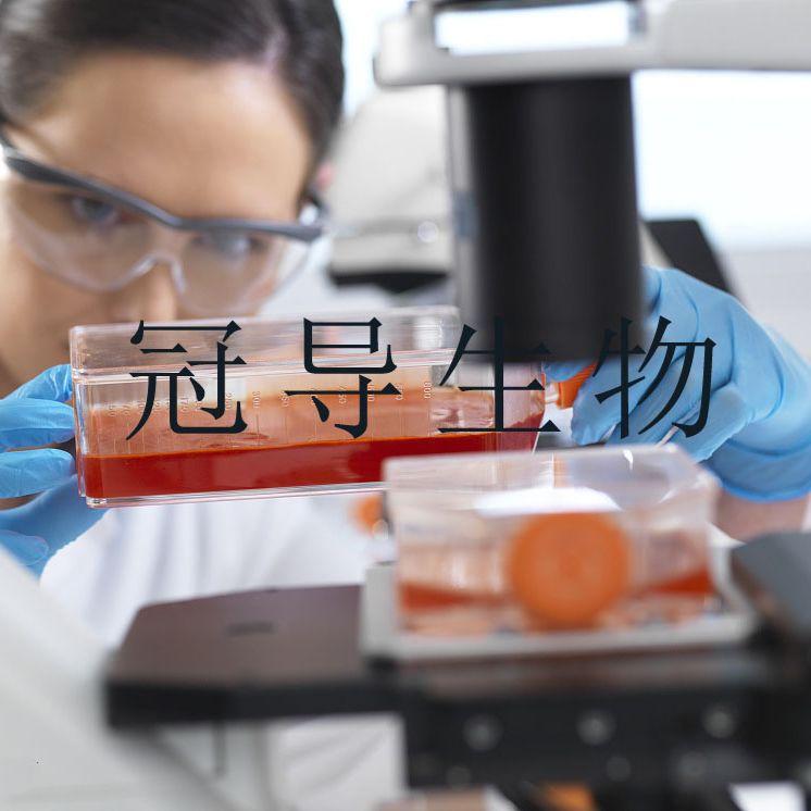 HTR-8:人滋养低代次细胞|完全培养基