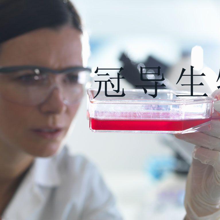 J82:人膀胱移行癌低代次细胞|完全培养基