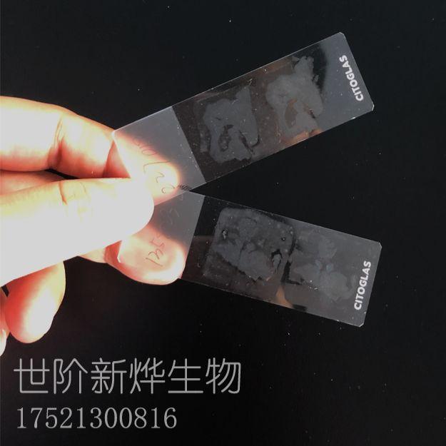 石蜡切片(常规样本)