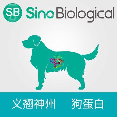TrkA 蛋白|TrkA protein|TrkA(Canine, His Tag)