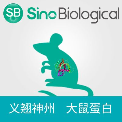 TrkA 蛋白|TrkA protein|TrkA(Rat, His Tag)