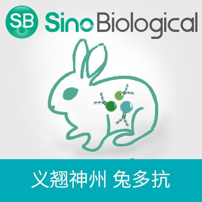 IL21 Receptor|IL21 Receptor antibody|IL21 Receptor抗体|Anti-Cynomolgus 兔多抗
