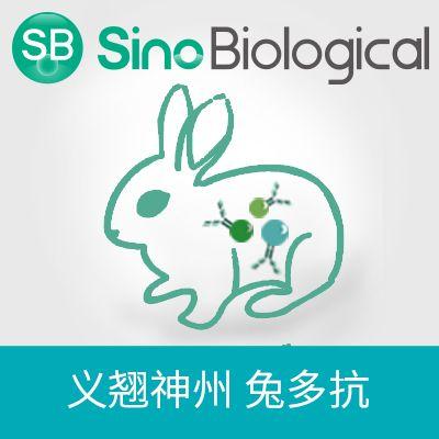MMP-9|MMP-9 antibody|MMP-9抗体|Anti-Rat 兔多抗