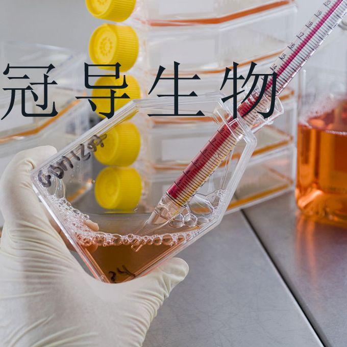 LA-N-1:人神经母细胞瘤反复传代细胞|完全培养基