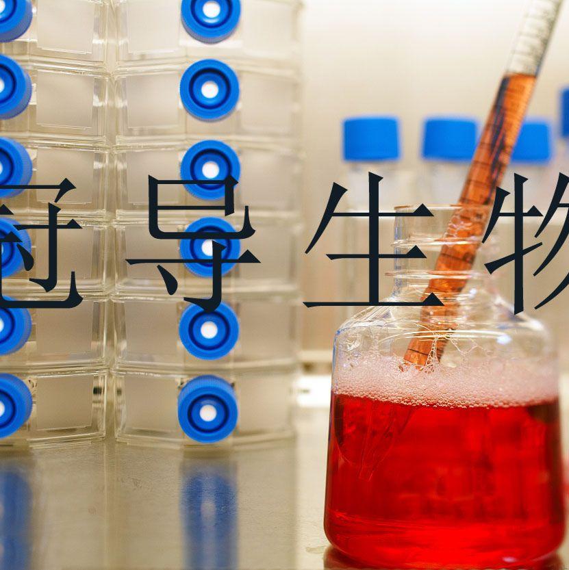 NK-92:人恶性非霍奇金淋巴瘤患者NK反复传代细胞|完全培养基