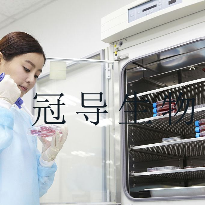 MDCC-MSB1:鸡淋巴瘤反复传代细胞|完全培养基