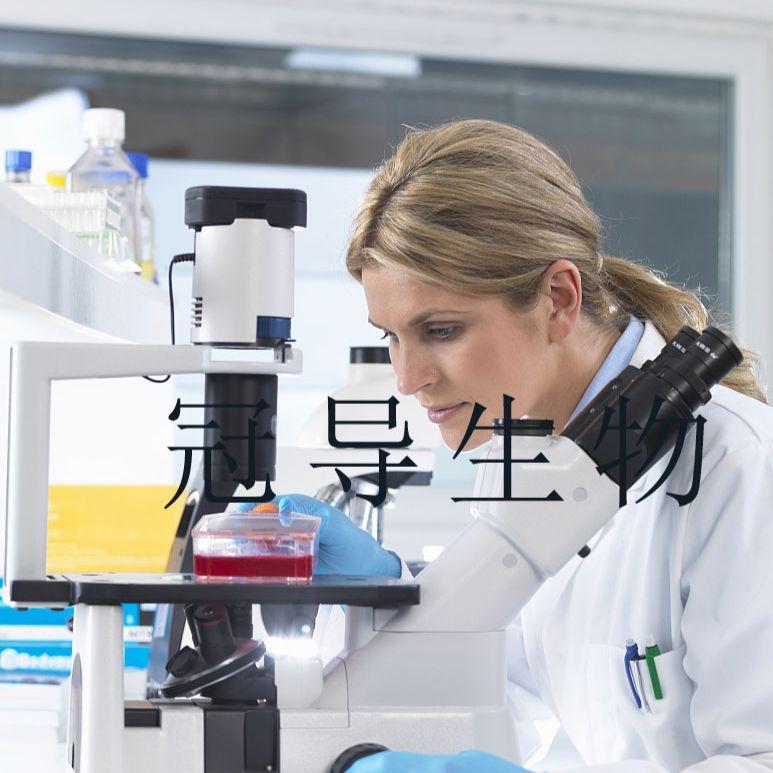 HepaRG:人肝癌反复传代细胞|完全培养基
