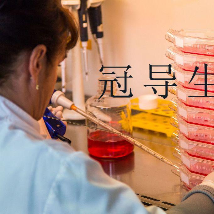 mIMCD-3:小鼠肾脏内髓集合管3上皮反复传代细胞|完全培养基