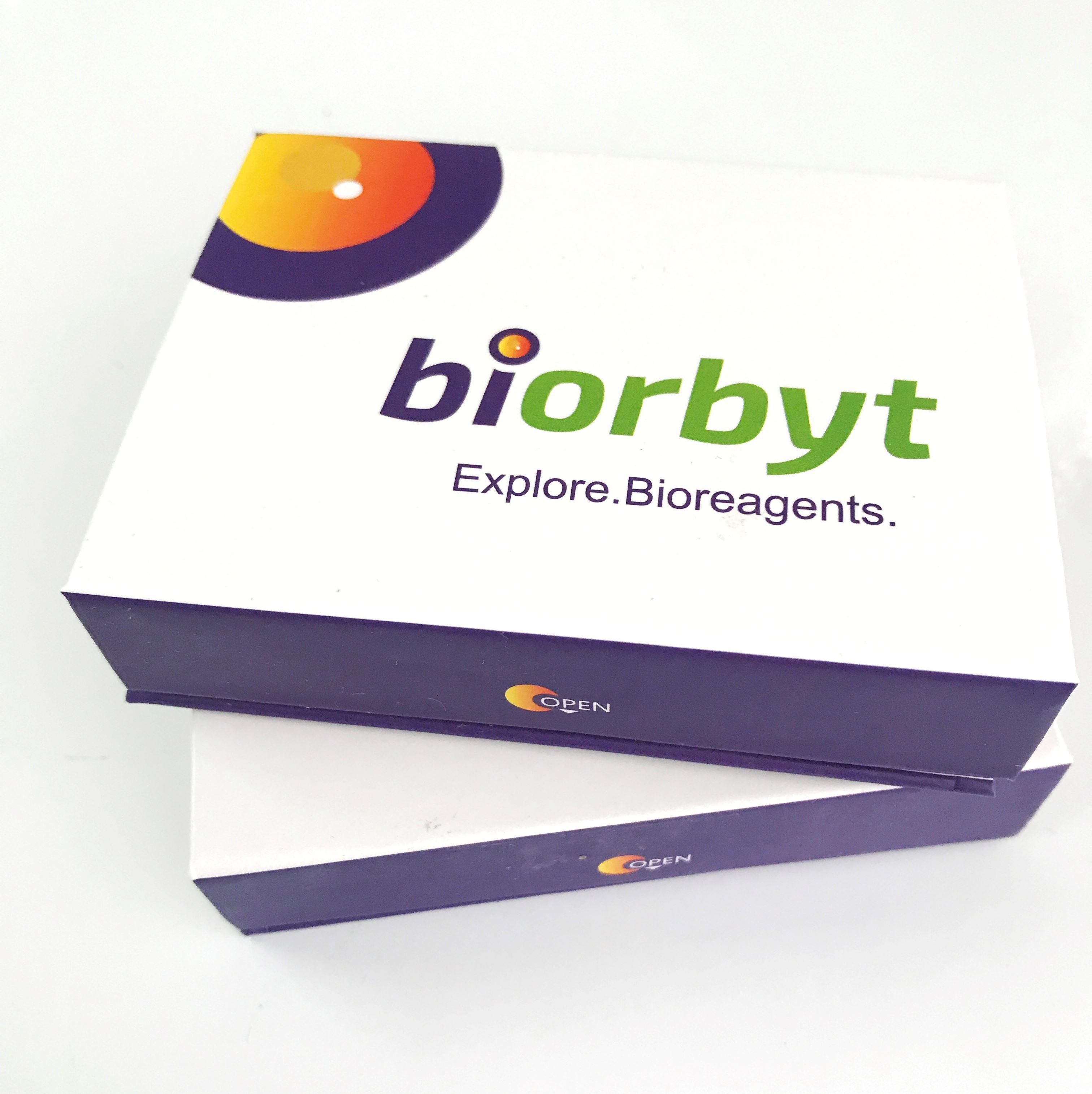 tdTomato antibody,orb182397,biorbyt