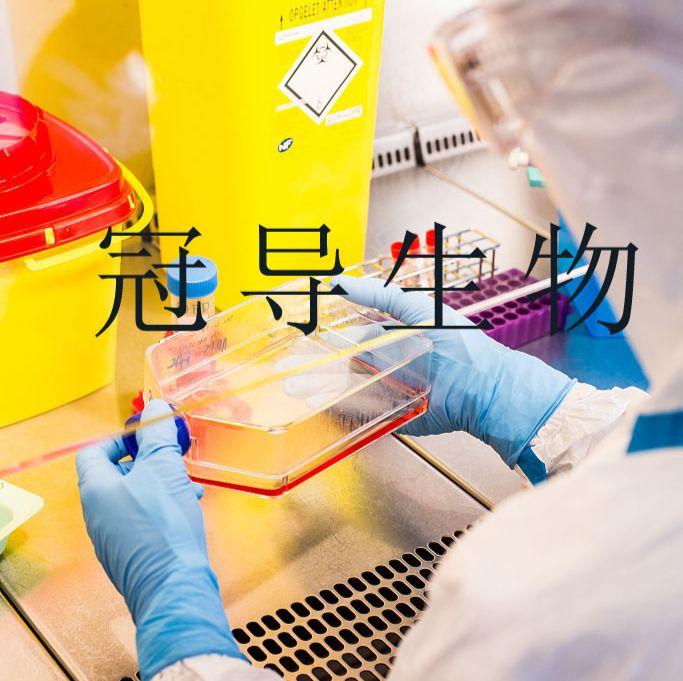 TEC:人胸腺上皮反复传代细胞|完全培养基