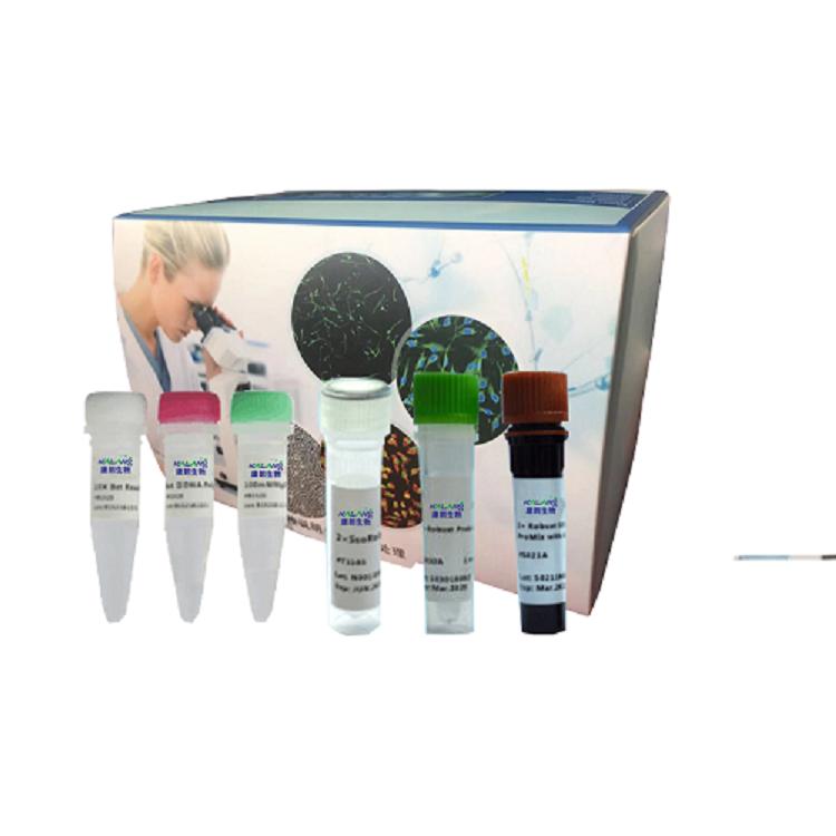 牛分枝杆菌卡介苗染料法荧光定量PCR试剂盒