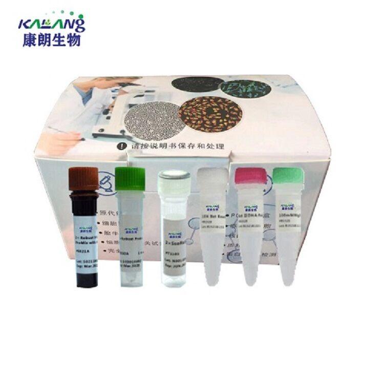 禽结核分枝杆菌染料法荧光定量PCR试剂盒