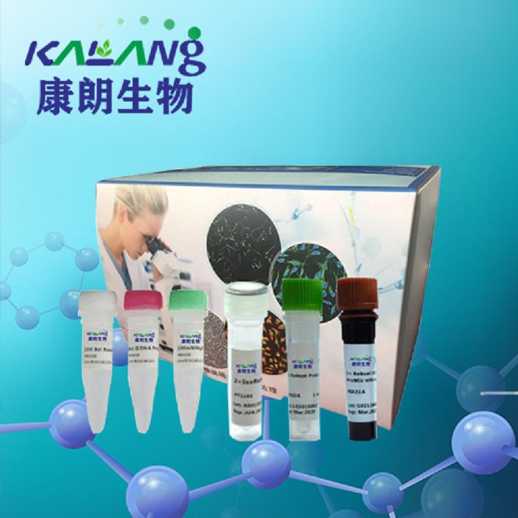 鸟分枝杆菌染料法荧光定量PCR试剂盒