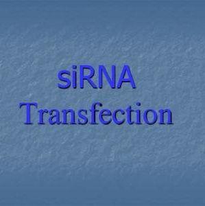 舍为斯-siRNA合成