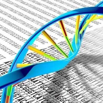 舍为斯-基因组测序