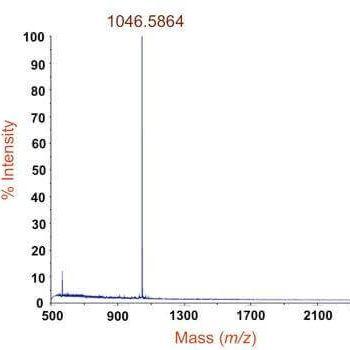 质谱检测:小分子结合蛋白质/翻译后修饰位点分析