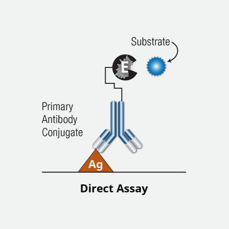 酶联免疫吸附(ELISA)实验/ELISA实验代测