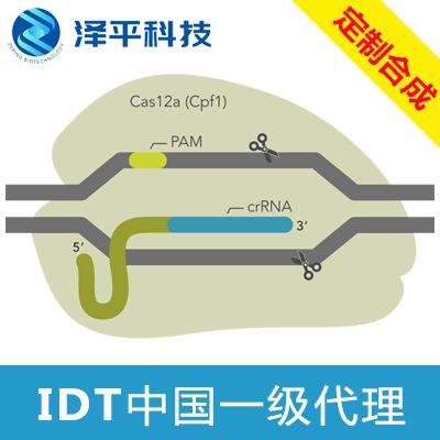 IDT Alt-R CRISPR-Cas12a(Cpf1)基因编辑系统